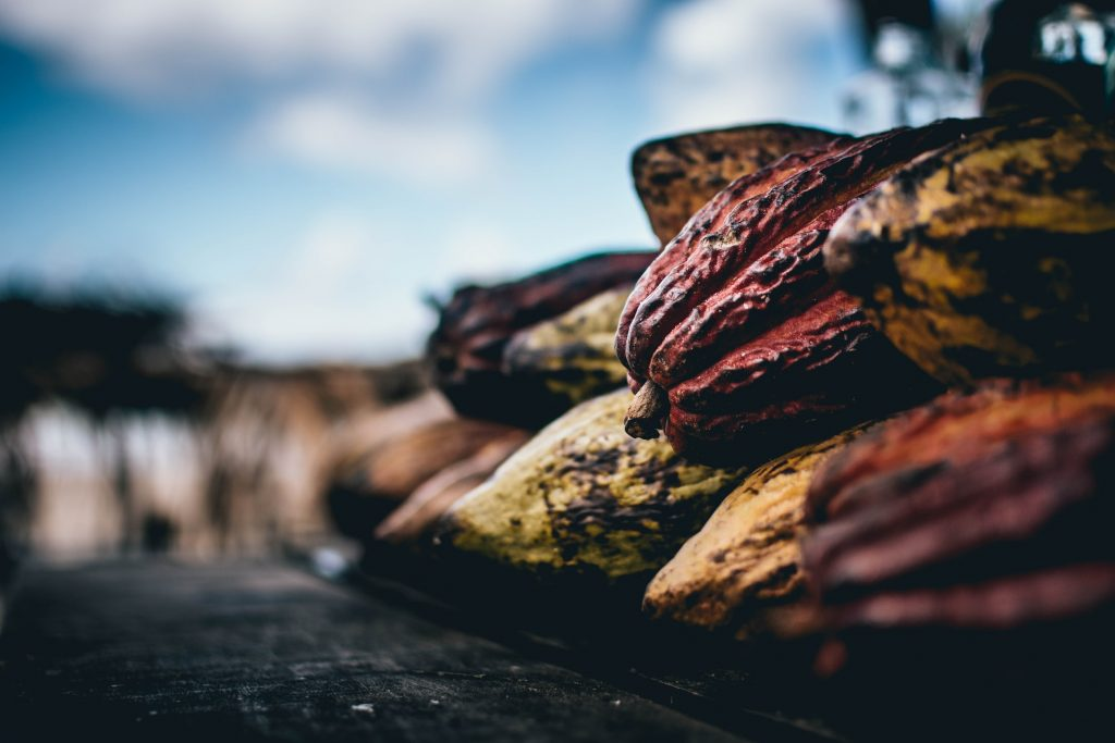 chocolat cacao